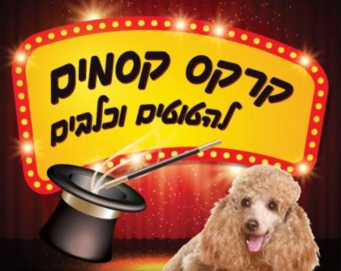 קרקס הקסמים - להטוטים וכלבים